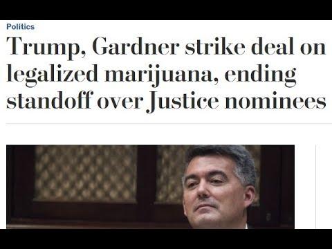 Top Marijuana Stocks - Trump, Gardner strike deal on legalized marijuana