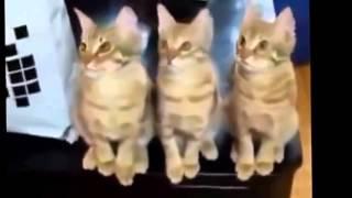 Stupid Animals   Very Funny Video Глупые животные смешное видео