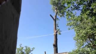 Быстро и качественно пилим дерево(, 2015-06-21T20:36:19.000Z)