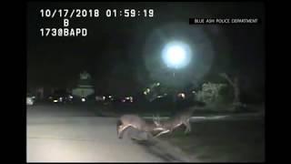 Two Bucks lock horns, fight on dashcam video
