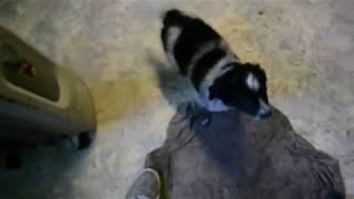 Феня взять собаку из приюта