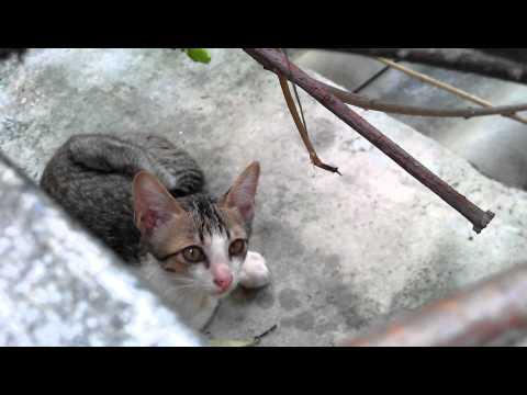 VDO 1080P HTC Sensation : Cat
