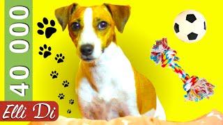 ТАЙНАЯ ЖИЗНЬ ДОМАШНИХ ЖИВОТНЫХ | ПРЯМОЙ ЭФИР НА 40 000 | Elli Di Собаки