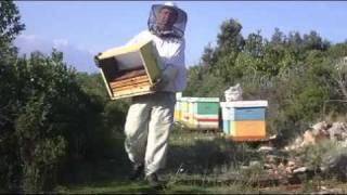 Pčelarstvo Damir Tafra - Vrcanje meda, Vis