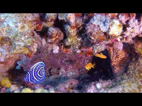 Emperor Angelfish with Go Pro (Dahab - South Sinai - Egypt)