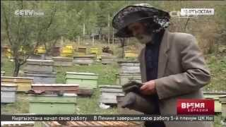 Пчеловоды Кыргызстана готовы экспортировать свою продукцию за рубеж(Пчеловоды Кыргызстана готовы экспортировать свою продукцию за рубеж В Кара-Кульжинском районе Кыргызстан..., 2015-10-30T02:42:16.000Z)