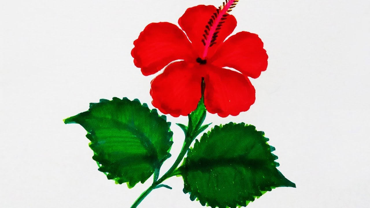 How To Draw Sembaruthi How To Draw Hibiscus Flower Step By Step