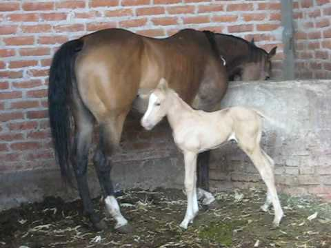 recien nacido potro