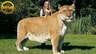 10 สัตว์ที่ใหญ่ที่สุดในแต่ละสายพันธุ์ (ใหญ่เวอร์)