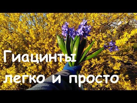 Вопрос: Цветы похожие на гиацинты, какие есть, как называются, фото?