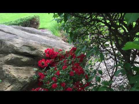 Melancholy Meditation: improv on Bm Gray Fox Flute