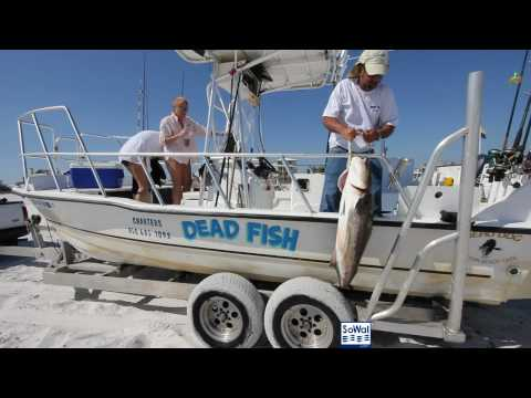 A Cobia Day With Dead Fish Charters In Grayton Beach, Florida