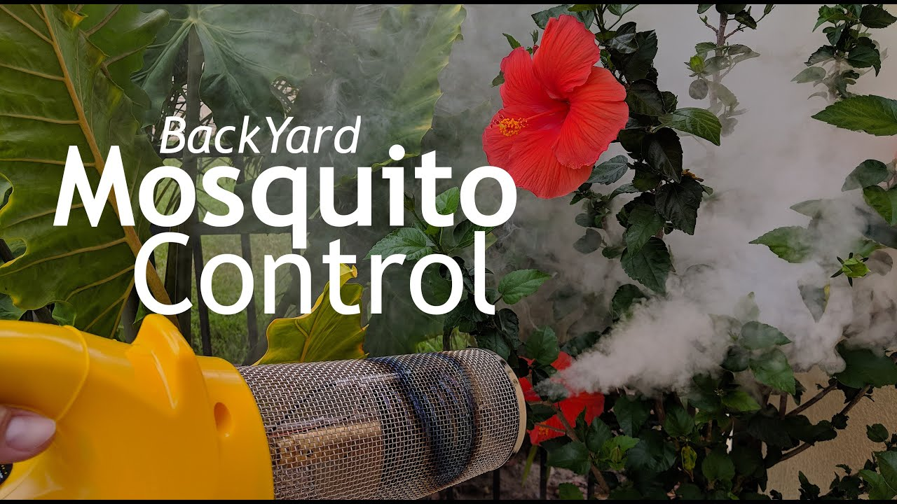 How To Get Rid of Mosquitoes In Your Yard and Landscape ...