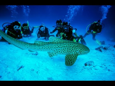 Scuba diving in goa, Scuba diving in India, best scuba diving in the world, best scuba diving videos