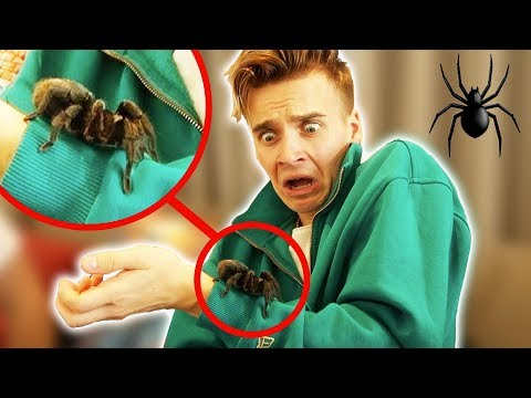 Surprising my boyfriend with a new pet!