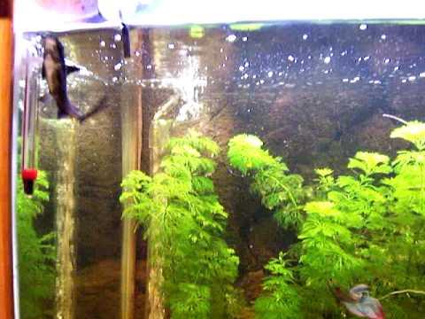 200L 4ft Freshwater tropical community fish aquarium