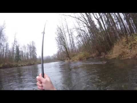 Chum Salmon On The Green River(Amazing Fight!!) Must Watch