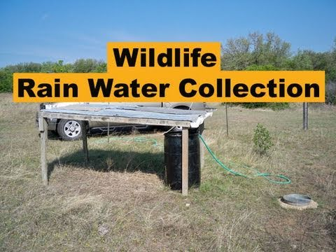Rain Water Collection For Wildlife Amp Hunting Youtube