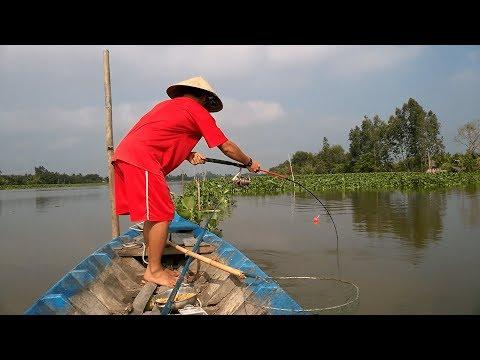 Câu cá tra sông: Chinh phục cá tra sông Cái Lớn