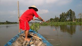 Fishing catfish: River monster in Mekong Delta