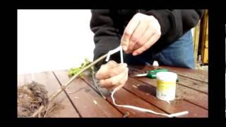 Anleitung Apfelbaum / Obstbaum veredeln vermehren durch Kopulation