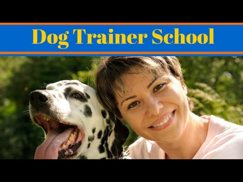Dog Trainer School - How To Become A Dog Trainer - YouTube