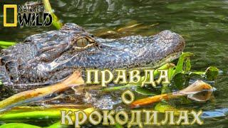 Вся правда о крокодилах. #Документальный фильм. National Geographic 12+ HD