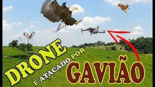 DRONE é ATACADO por GAVIÃO mavic zoom wanzam fpv