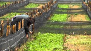 Snail farming European Commission english version