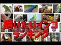 カラスの飼いたい大型、中型インコランキング の動画、YouTube動画。