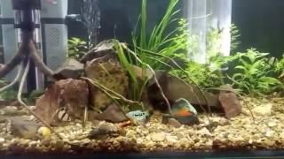 Видео аквариума от подписчика  #10 Аква 160 литров(Напоминаю, что каждый желающий может прислать видео своего аквариума и я его опубликую на канале! Аквариумы..., 2017-01-29T17:50:11.000Z)