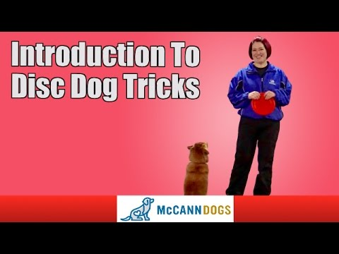 Teaching Your Dog Frisbee Tricks
