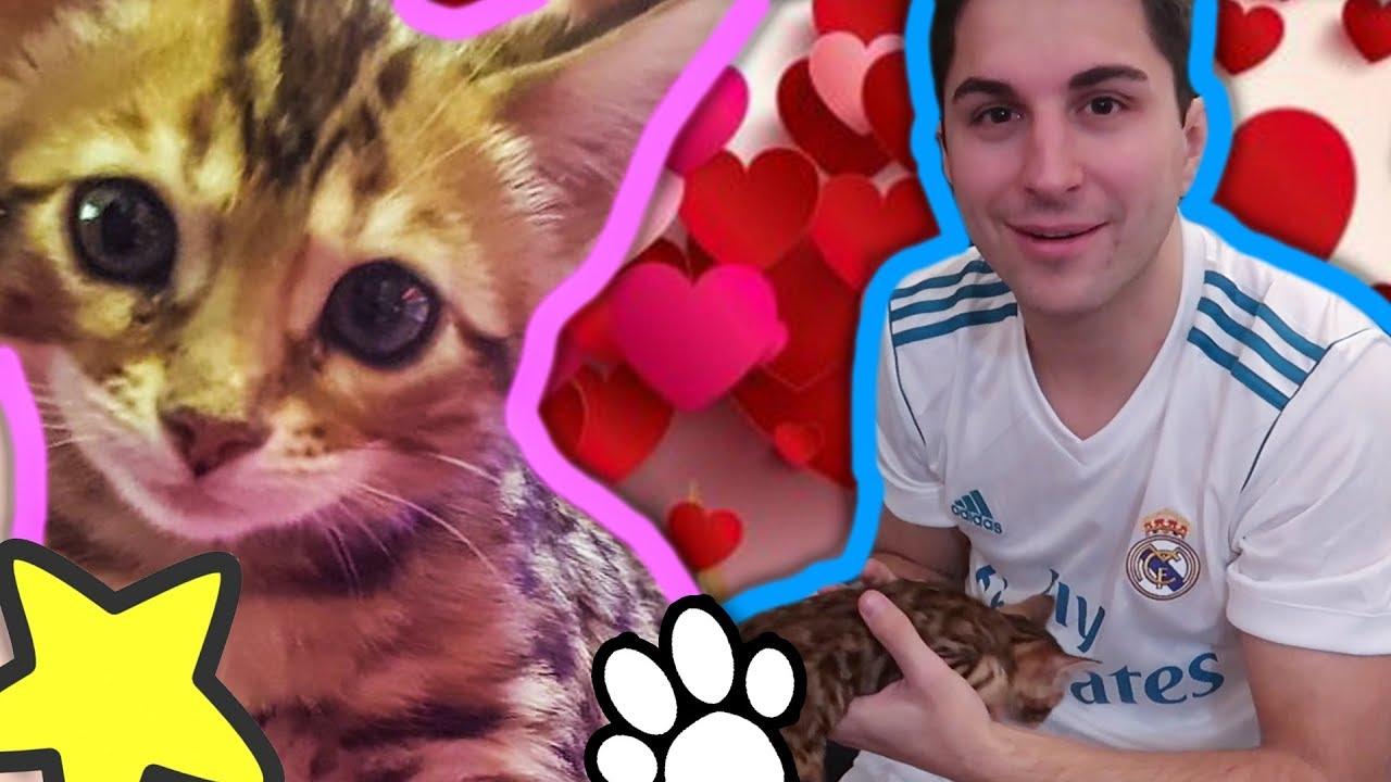 Regalo Un Gattino Al Mio Fidanzato Youtube