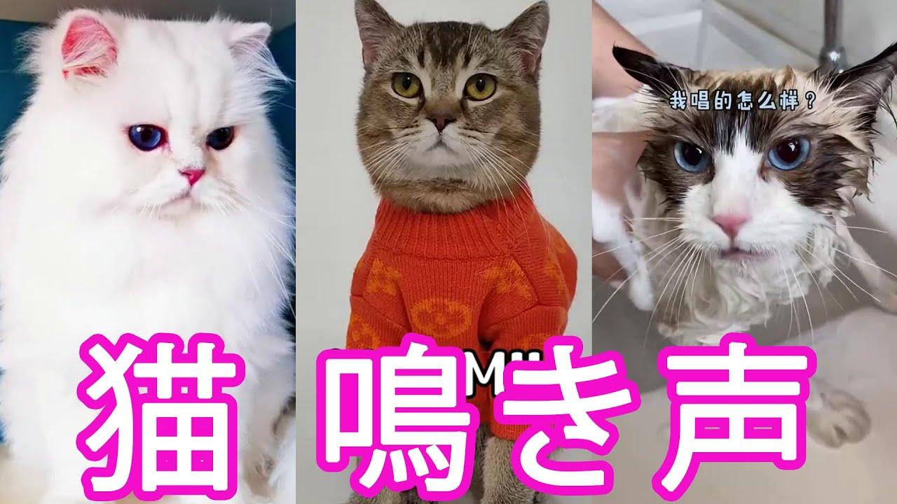 【猫 鳴き声】猫が絶対に寄ってくる音・鳴き声,かわいい猫