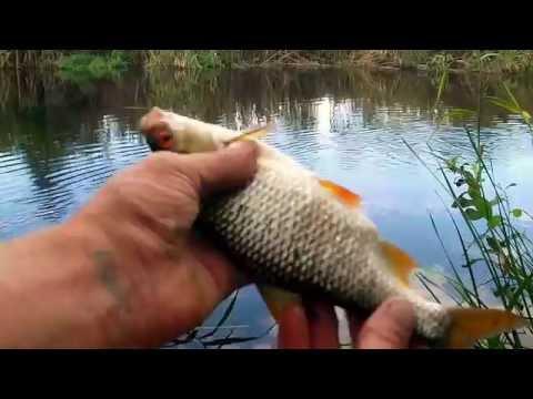 Рыбалка на Донце. Как не остаться без улова.