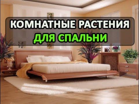 КОМНАТНЫЕ РАСТЕНИЯ ДЛЯ СПАЛЬНИ!