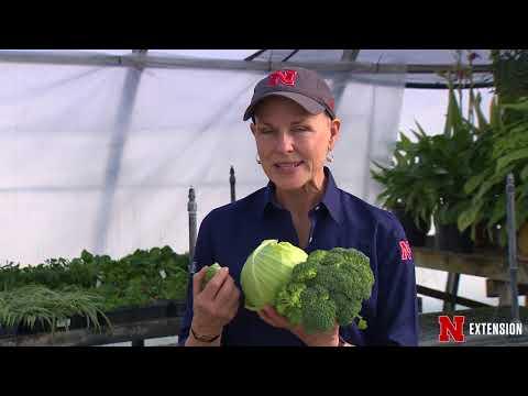 Backyard Farmer Presents  Lifestyle Gardening 503