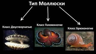 9.2 Моллюски - разнообразие (7 класс) - биология, подготовка к ЕГЭ и ОГЭ 2018
