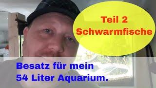 Fische für mein 54l Aquarium. Schwarmfische  in Aktion mit Trigonostigma hengeli & Co