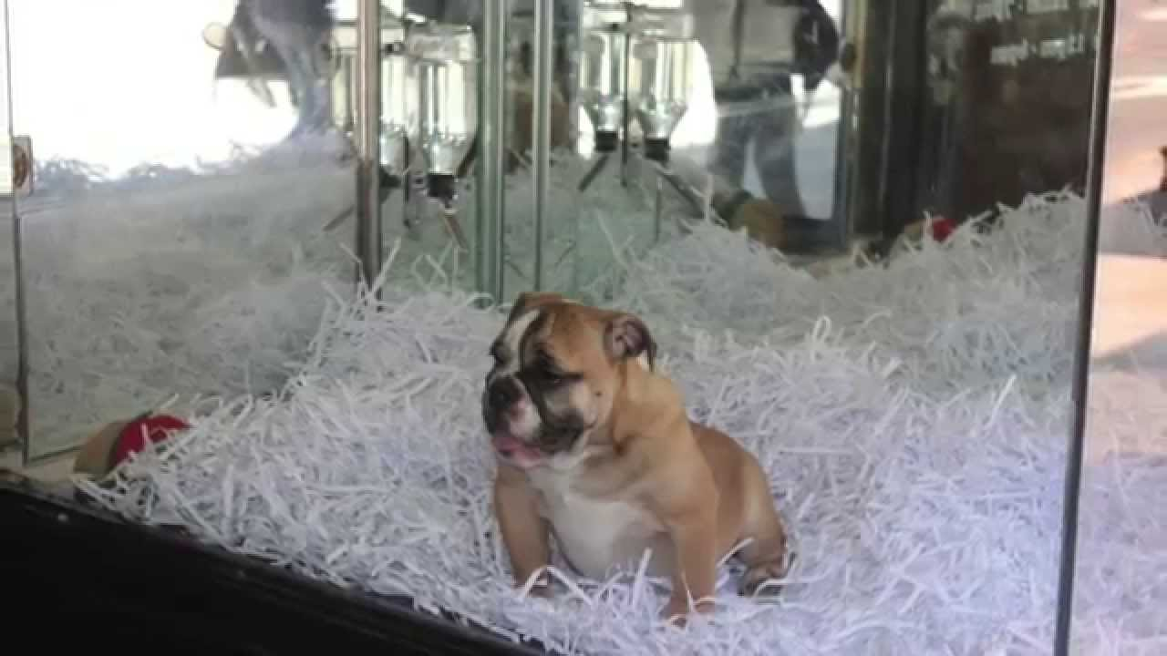50 Cute Manhattan Puppies and Kittens