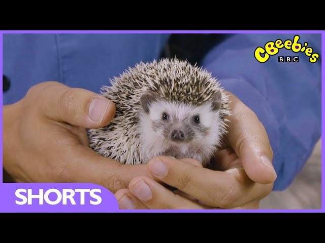 CBeebies | Andy's Secret Hideout | Hedgehog