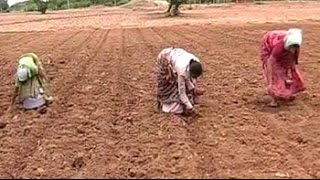 Cotton farmers in Telangana distressed over high input costs