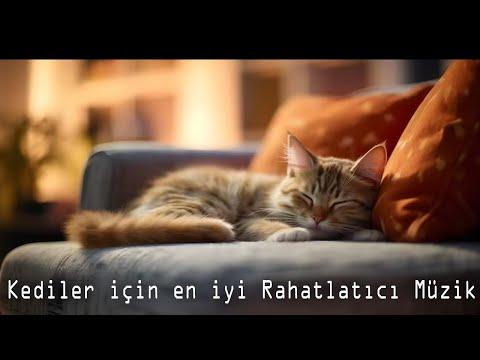 Kediler için en iyi Rahatlatıcı Müzik