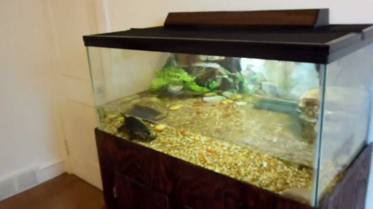 Snapping Turtle And His Tank Setup Quot Update Quot Youtube