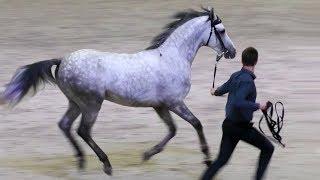 Редкие породы лошадей: ТЕРСКАЯ. Серебряные лошади России #СозвездиеТерца #ИППОсфера #Hipposphere