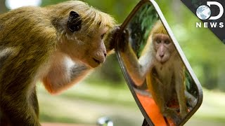 Which Animals Recognize Themselves In Mirrors?