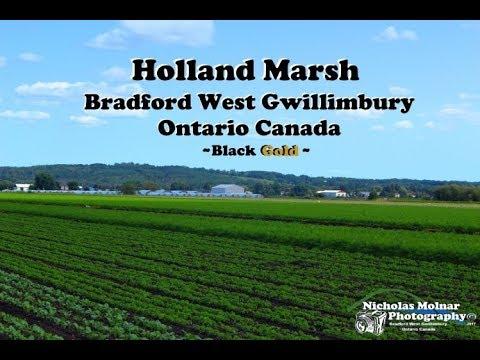 Holland Marsh Bradford Ontario Canada ~ Black #GOLD ~ Time Lapse HD