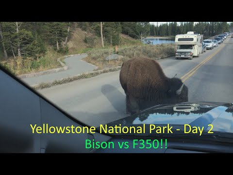 Full Time RV Family - Yellowstone National Park - Day 2 - Bison vs F350 - EP11