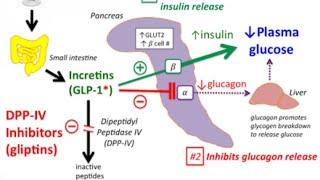DPP-4 Inhibitors: Sitagliptin,vildagliptin Mechanism of action