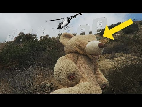 TEDDY BEAR CLIMBS THE HOLLYWOOD SIGN (HELICOPTER CALLED)